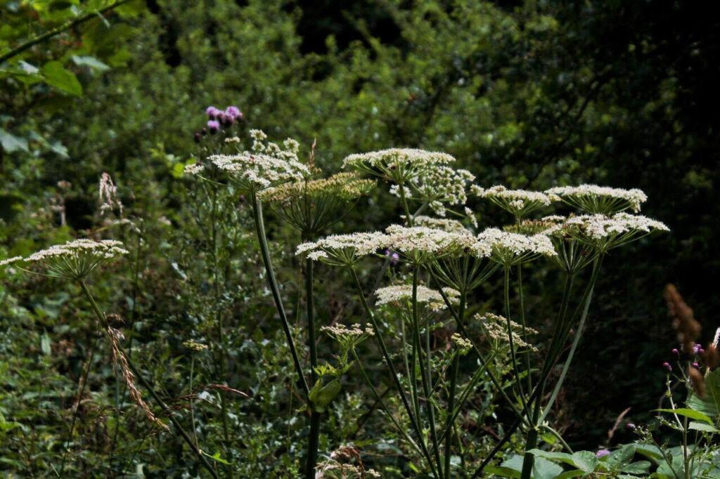 wild flowers in undergrowth
