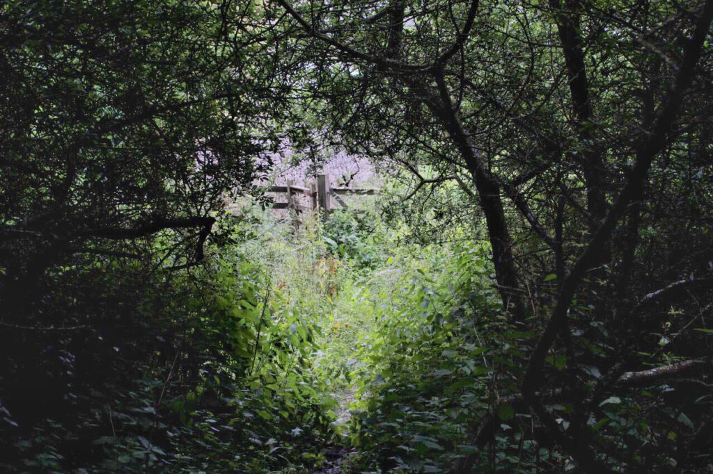 an overgrown gateway with shadowy trees and nettles